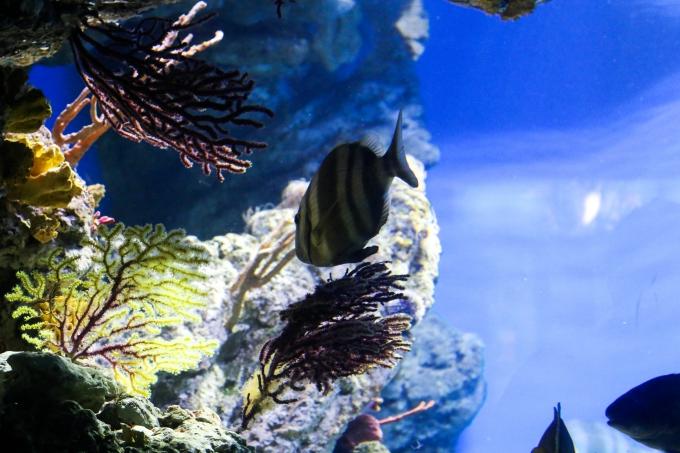 barcelona-aquarium2