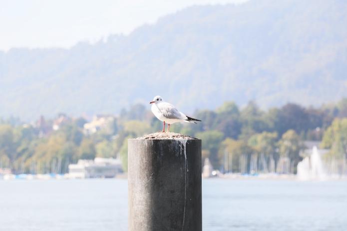 Zürich-Schweiz-Zürichersee