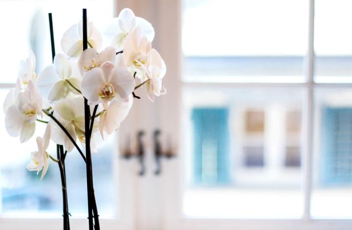whitelinehotels-swiss-hotel-widder-zürich