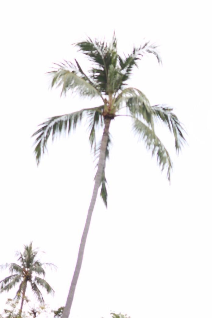 thailand-travel-travelblogger-island-palm