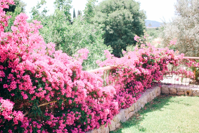 travelopo-villa-pollenca19
