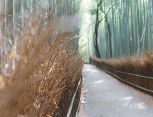 Arashiyama Bamboo Grove Kyoto + detaillierter Wegbeschreibung